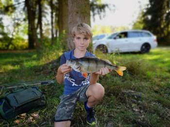 Beim Jugend-Hechtfischen  wurde dieser schöne Barsch von Jason Schrank an Dietenheim I gefangen  Länge: 37 cm  Gewicht: 0,730 kg