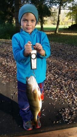 Flussbarsch (Perca fluviatilis): 44cm und 800g  gefangen in Dietenheim I